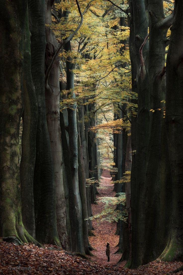 The Long and Narrow Road. - )
