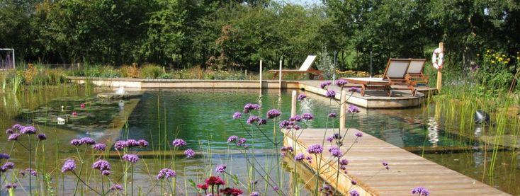 woodhouse-biotop-natural-pool-24