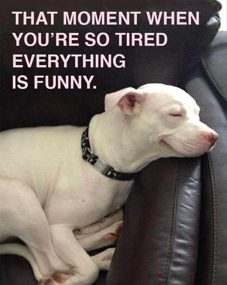 best 20 funny friday memes ideas on pinterest funny