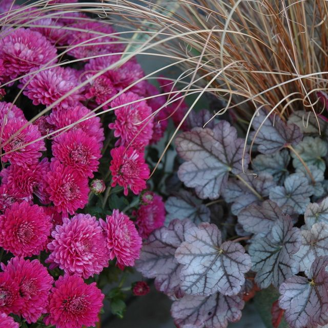 114 best images about Fall and Winter Gardening on