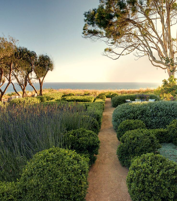 narrow path with overhanging shrubs encourages foot traffic by showing the whole path in a straight line