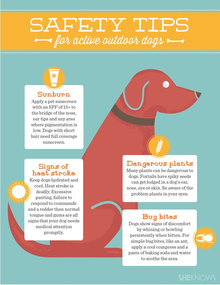 Here are some safety tips for active outdoor dogs