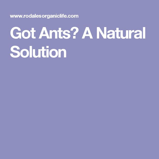 Got Ants? A Natural Solution