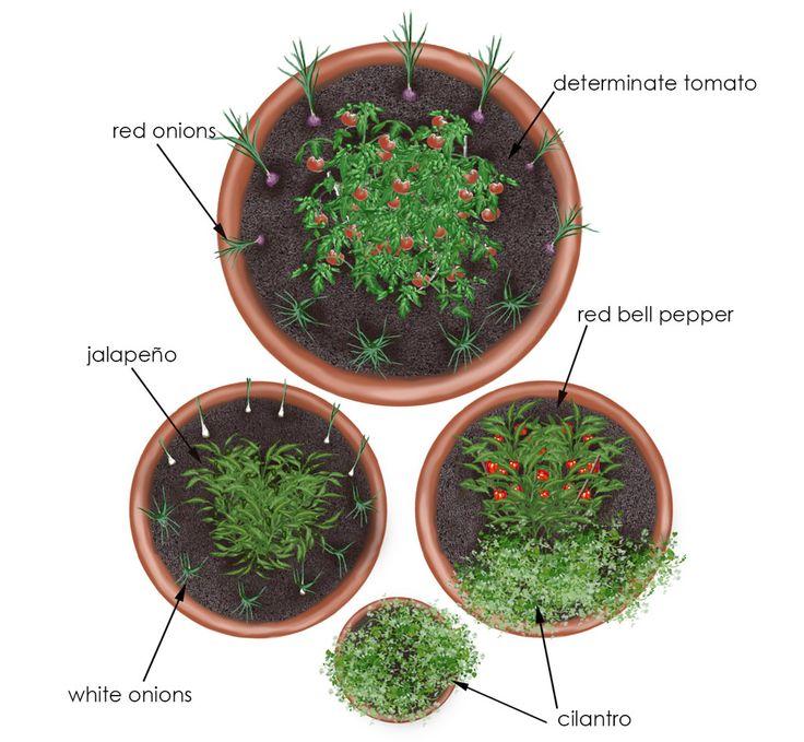 salsa garden in containers, overhead shot