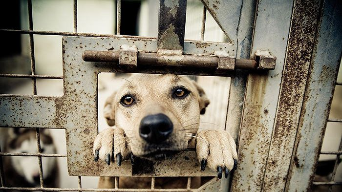 PLEASE SIGN AND SHARE!! Petition · The White House, Barack Obama: Abolish Kill Shelters in the United States · Change.org