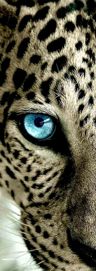 """He's got The """"Eye Of The TIGER"""""""