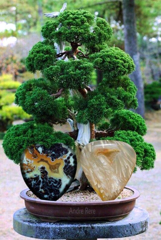Stones and Bonsai