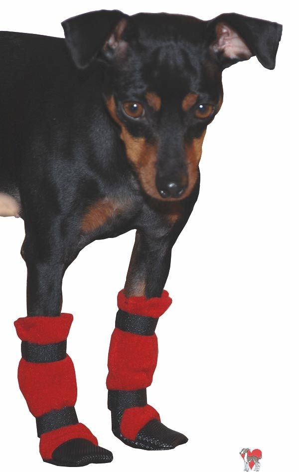 Do it yourself dog boots and dog booties! Who wants their puppy to get cold widdle paws.
