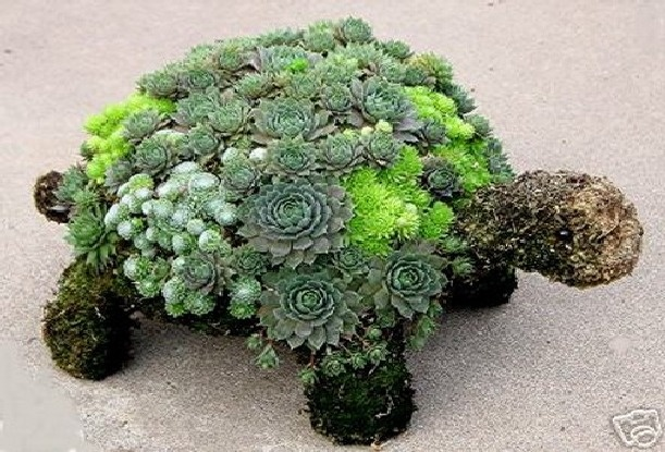 I want one of these succulent turtles.