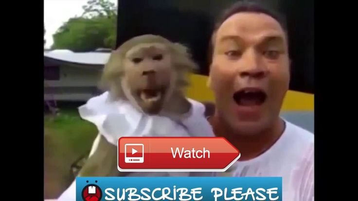 🐙 FUNNY Animals Talking Screaming Like Humans 🐵 dogcathen all 🐧 on Pet Lovers 🐼 #funnyanimals