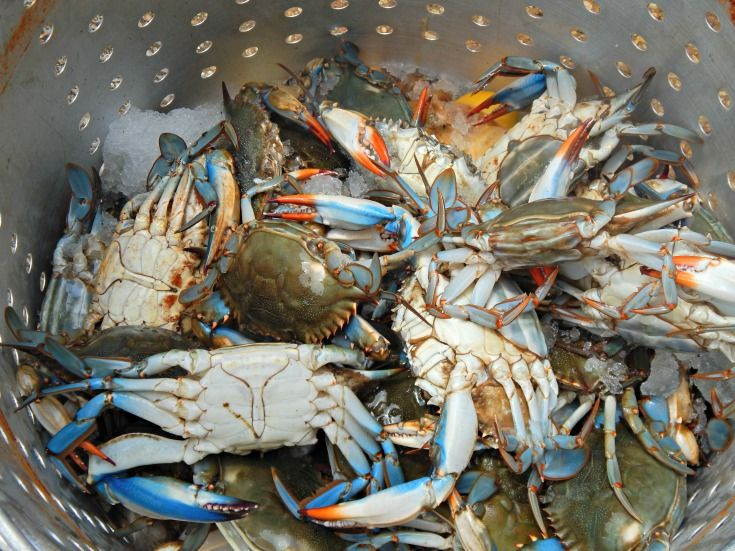 Have you ever wanted to have a Crab Boil but wasn't sure how to prepare and cook the Crabs. I am going to share my husband's Blue Crab  Boil recipe. My husband has been boiling and cooking seafood since he was a young boy growing up on the Bayou, in South Louisiana. I am fortunate…