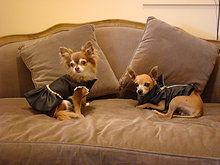 it-dogs vestiti e accessori per cani | winter love in cortina
