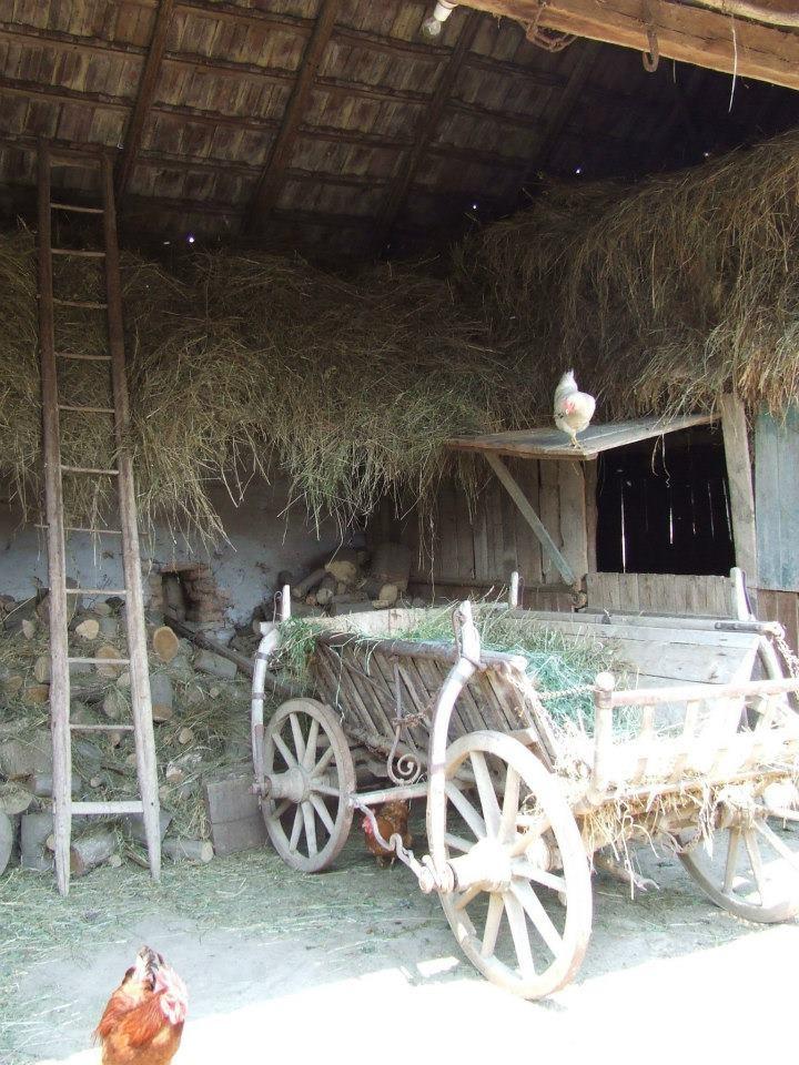 Bunicul avea o scara asa, pentru podul cu fan. Iar vaca si vitelul stateau dedesubt in loc de caruta (Discover Romania in 12 Steps Facebook Page)