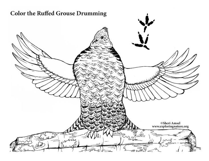 grouse coloring pages drums pages to color printable coloring pages drum kit coloring books colouring sheets drum
