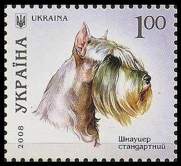 """Шнауцер обычный или бородатый пинчер, происходит из Германии (Баварии) и прилегающих к ней стран - Швейцарии и Австрии. Собаки этой породы преимущественно использовали как помощника на ферме и для истребления крыс, сейчас же это """"семейная"""" собака компаньон."""