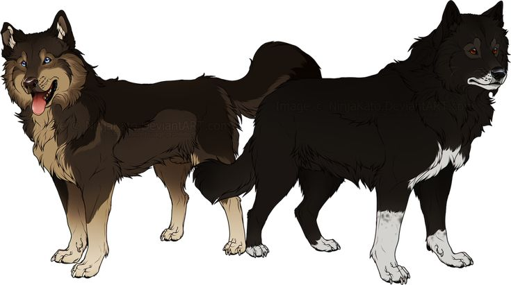 Togo And Balto By Ninjakato The Real Sled Dogs Who Saved