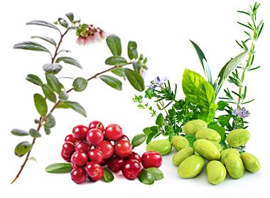 The active ingredients in the strengthening Therapy / Cranberry Organique