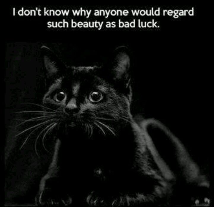 Black cats are no different than any other!!! Love all of God's beautiful creatures!!!