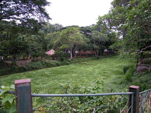 La Mesa Ecopark Quezon City, Philippines (masuzette)