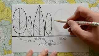 Drawing Tree Forms by www.lisaorgler.com