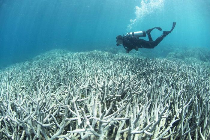 The Great Barrier Reef could be dead within 20 years if greenhouse gas emissions are not curbed, scientists say.