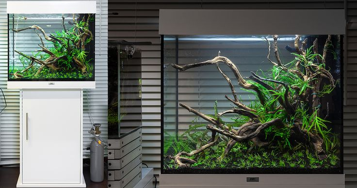 juwel lido 120 | aquarium | pinterest - Decorazioni Juwel