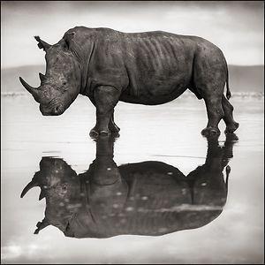 I really love rhinoceroses!