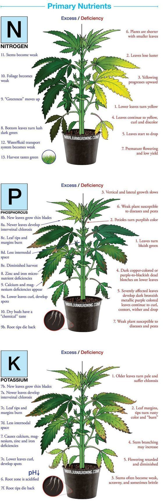 """What's Wrong With """"Medical Marijuana""""?"""