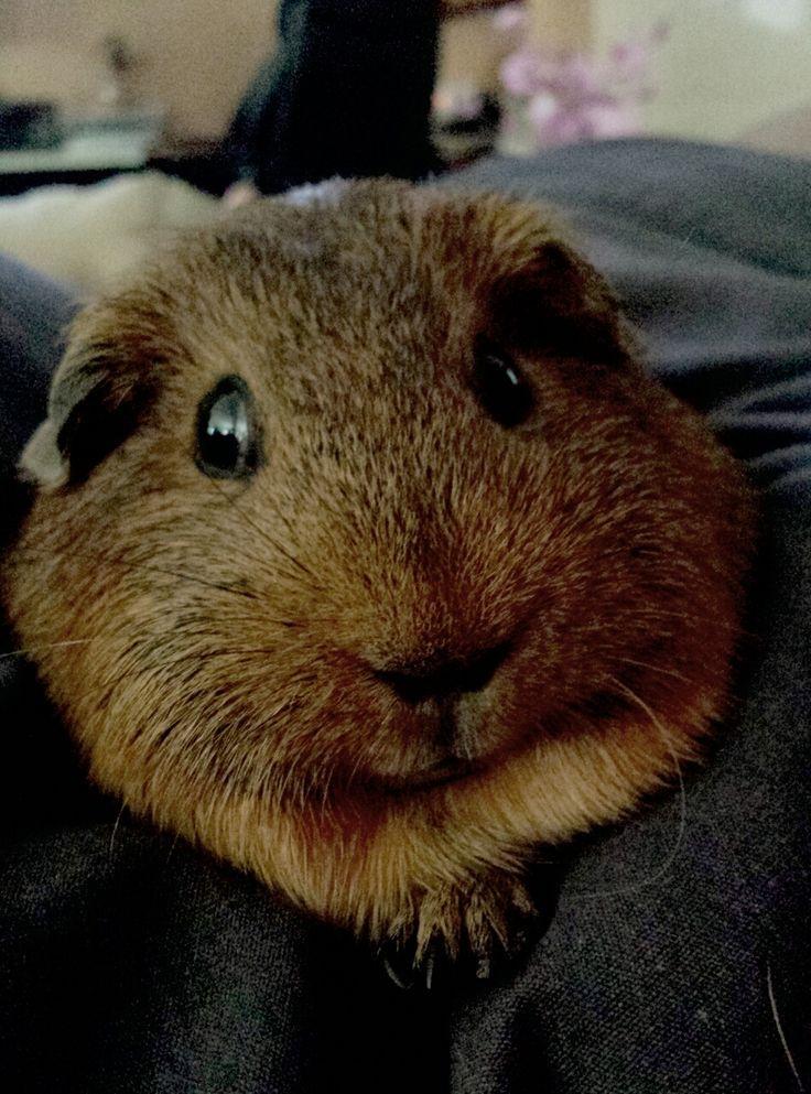 Pin On Fluffy Little Piggies