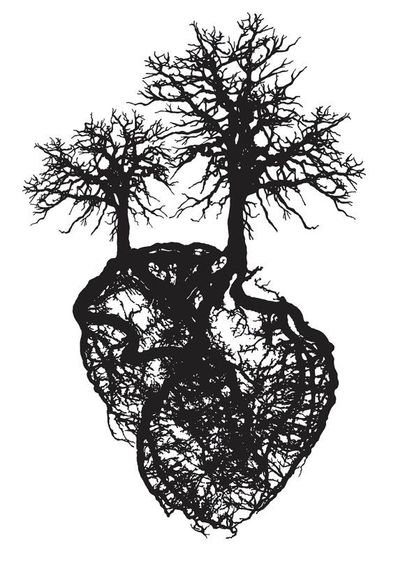 This is really awesome. This shows the vascular structure of the human heart!
