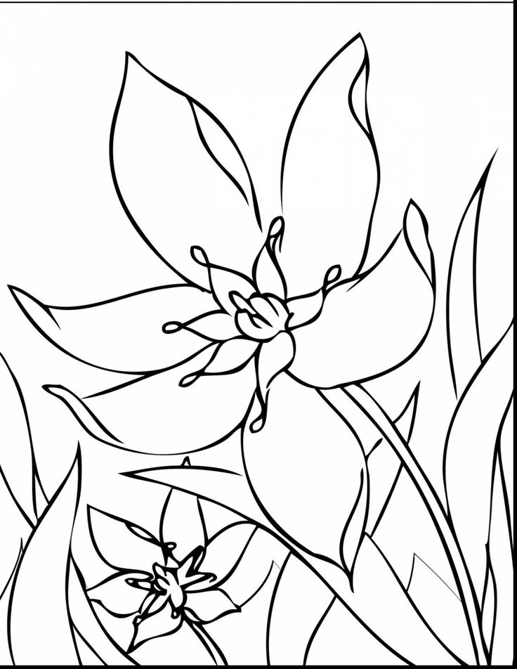 93 best Flower Coloring Pages images on Pinterest | Flower ...