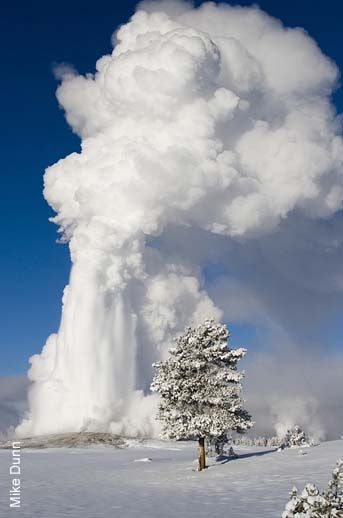 Old Faithful erupting, winter in Yellowstone National Park, Wyoming dogwoodalliance.org