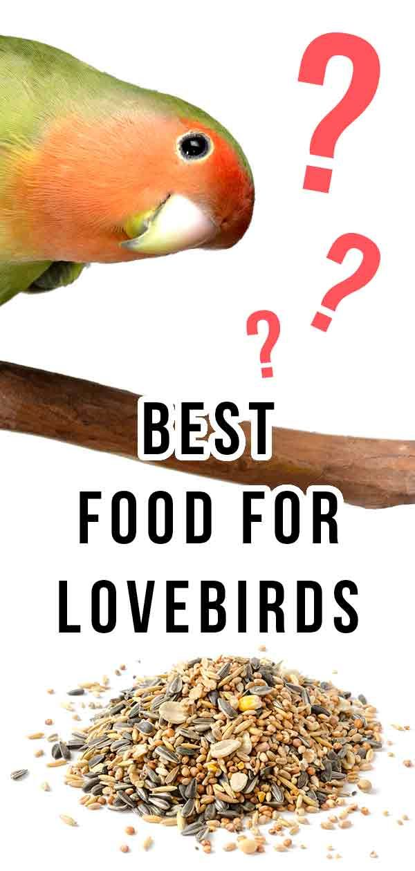 What Do Lovebirds Eat The Best Food