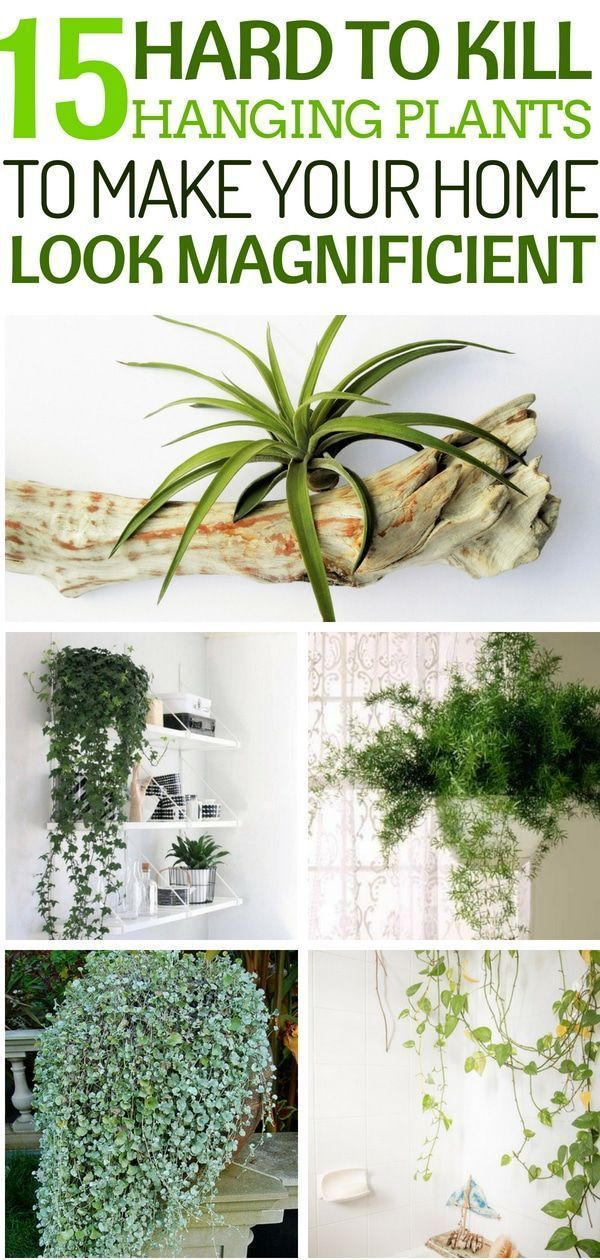 These 15 indoor hanging plants are amazing and are super low maintenance an make