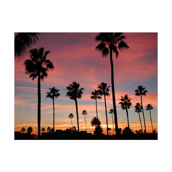 long beach found on Polyvore: Families Trips, California Sunsets, Favorite Places, California Dreamin, Palms Trees, California Dreams, Beautiful Sunsets, Long Beaches California, Beaches Sunsets