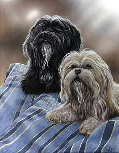 LHASA-APSO-TIBETAN-DOG-FINE-ART-LIMITED-EDITION-PRINT-by-Paul-Doyle