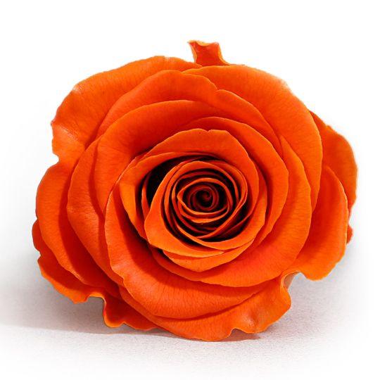 Trandafir Premium Oranj Stabilizat