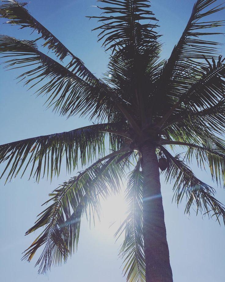 予報に反して今日は晴れもうすっかり夏模様です  #沖縄#恩納村#晴れ#やしの木#夏#暑い#明日は雨#日焼け#日焼け止め#gw#okinawa #onnason