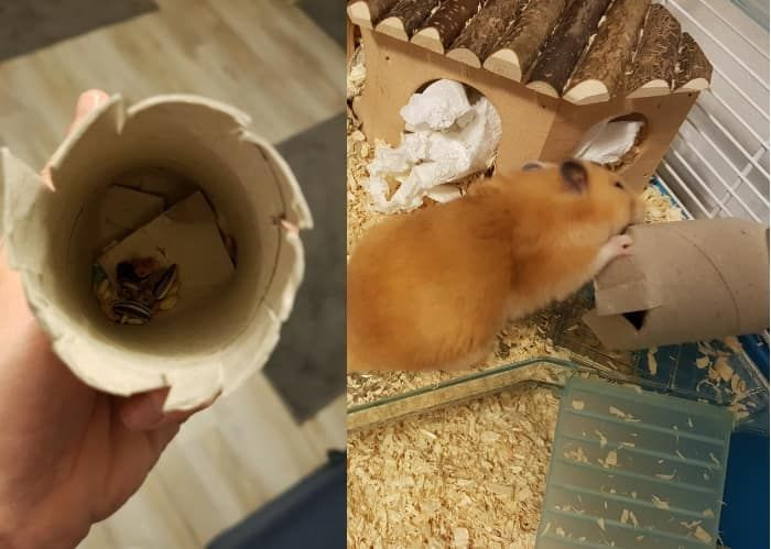 Best Hamster Toys Dyi And Store Bought Hamster Toys Buy Hamster Hamster
