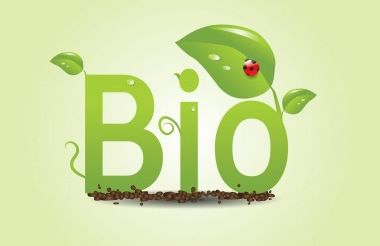 Welcome to Biomass Energy Many people think that the term 'biomass energy' is something new but it's one of the oldest forms of energy in the world. It's also one of the greenest, cheapest and easiest to extract energy from. Not only will you save huge amounts of money but you will contribute to helping …