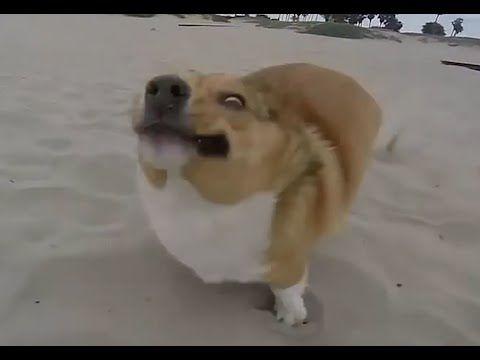 video divertenti canipazzi | Le migliori cadute dei cani