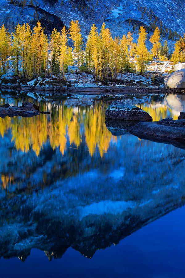 ✮ Tamaracks reflecting in Lake Leprechaun in Washington's Enchantment Lakes wilderness area