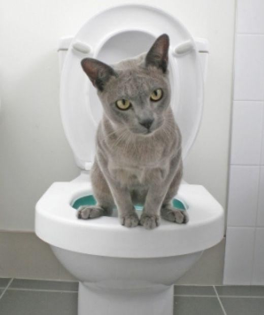 """Bom dia, como estão? A urina do gato é bem famosa, pois tem cheiro bastante desagradável, mas não é problema quando o gato usa a caixa de areia corretamente, pois a areia """"disfarça"""" o c…"""