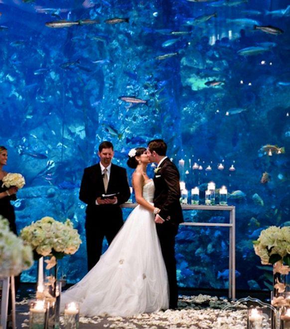 The Florida Aquarium At Tampa Fl Central Wedding Venues