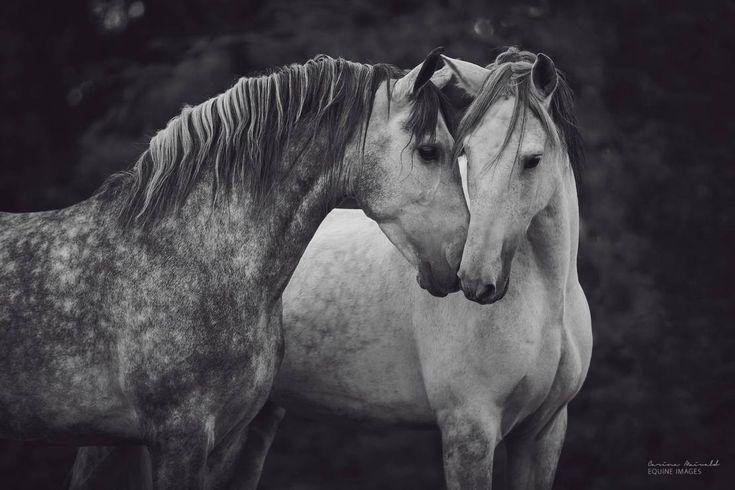 """""""To ty"""" - To najpiękniejsze zdjęcia koni, jakie kiedykolwiek zobaczycie [GALERIA]"""