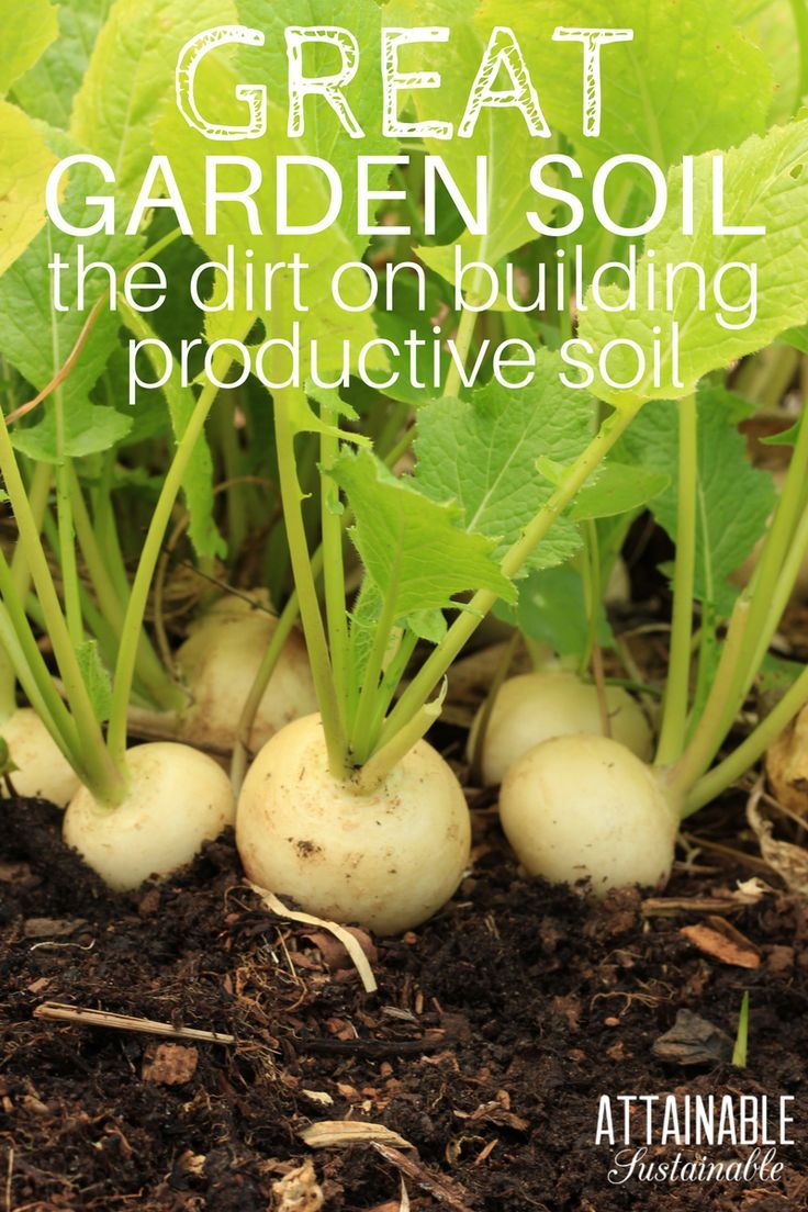 5 Ways To Improve Soil For A Thriving Vegetable Garden With