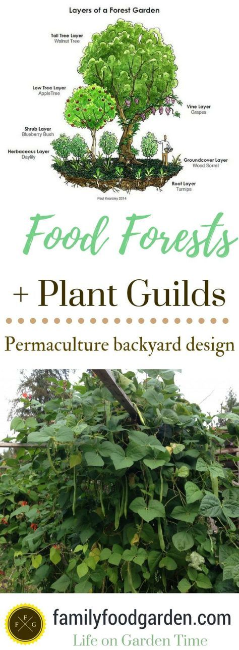 822 best permaculture images on pinterest permaculture garden food forests plant guilds in permaculture design fandeluxe Image collections