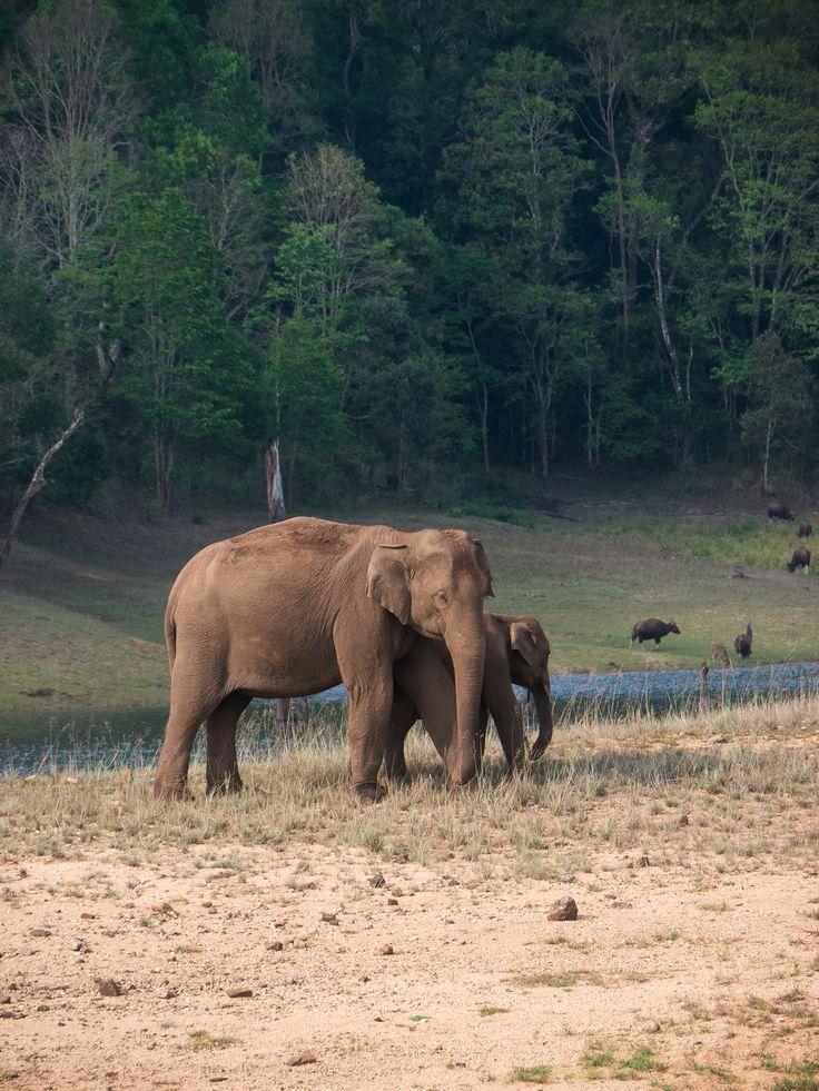 Periyar national park, Thekaddy, India. 2016