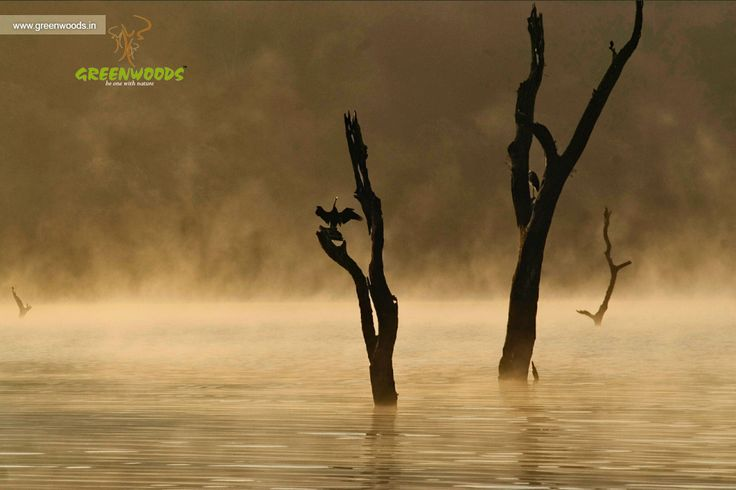 Beauty of Thekkady, Kerala. Email : reservations@greenwoods.in