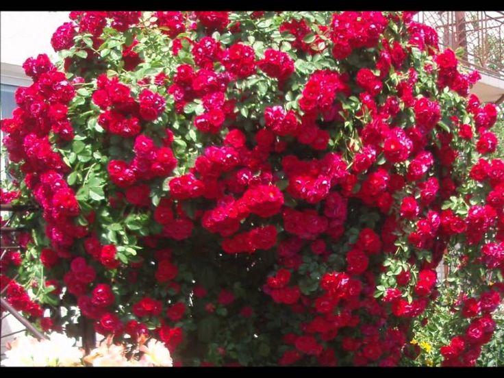 Captain Cook -Saksofony; `` Czerwone jest Wino``,``Niebieskie Curacao`` ...